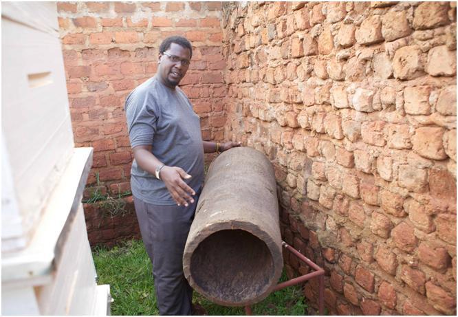 Фото 1. Бутылочная пальма - используется для изготовления ульев