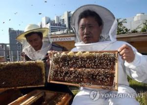 Генеральный секретарь Национальной комиссии Корея по делам ЮНЕСКО и Парк Джин, глава программы городского пчеловодства в Сеуле, во время церемонии сбора урожая меда на крыше здания в центре Сеула. 15 сентября 2015 года (Yonhap)