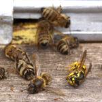 Гибель пчёл
