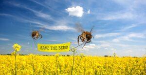 Влияние Неоникотиноидов на здоровье пчел и человека