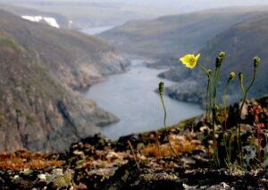 Флора плато Путорана