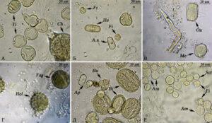 A.s. – Angelica sylvestris, Am. – Amoria repens (клевер ползучий), Ap – Apiaceae (сем. зонтичные), Bi – Bistorta major, Bu – Bunias orientalis, Ch – Chamaenerion angustifolium (иван-чай узколистный), Fag – Fagopyrum esculentum (гречиха посевная), Fi – Filipendula ulmaria, He – Heracleum sibiricum, Hel – Helianthus annuus (подсолнечник обыкновенный), Me – Melilotus type (донник), On – Onobrychis sibirica (эспарцет сибирский), Scr – Scrophulariaceae (сем. норичниковые), Ti – Tilia cordata