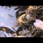 Пчелы пьют соленую воду